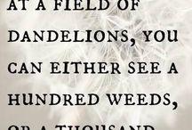 Dandelion Divas