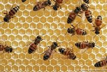 Bees / by Karissa Morton