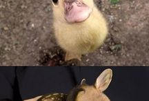 Cute animals / At least I think they are