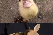 Małe zwierzątka