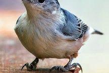 Mon truc en plumes  / by Samia