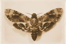 Moths eat clothes
