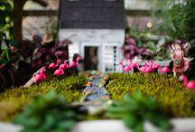 fairy gardens / by Jane Rhodes