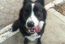 Rita / My lovely border collie!