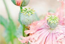 Garden: Flora