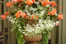 Front Porch / by Judy Potts