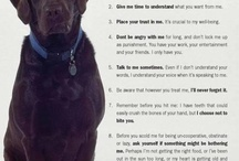 pets / by Lauren Rourke