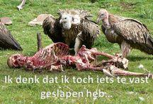 Grappig door Carl / Zelfgemaakte Nederlandstalige memes