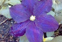 Garten / Meine lieblingesblumen