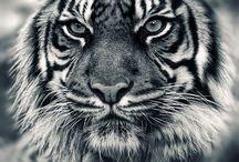 Animals ♥