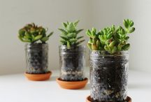 inspiration . plants / by Submicrocosm