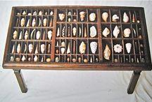 Shells cabinet