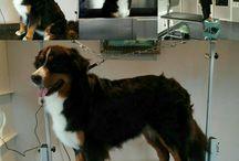 Aaltje's Trimsalon / mijn hobby ontstaan uit liefde voor honden
