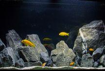 cichlid rock aqua scape