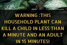 Toxic Plants / Toxic Plants. Dangerous Plants. Harmful Plants.