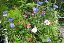 Tuinbloemen Marie-Fleurie Bloemenatelier / Tuin als inspiratiebron