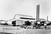 Wide Bay Sugar Industry / Sugar and its associated industry
