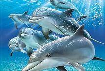 Beach & Dolphins & Ocean