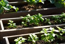 Gardening w/Raised Beds / by L.r. Smith