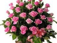 Send flowers to Bathinda / Flowers are the symbolize and elegence,thoughtfulness and care for the person to whom you are sendin this beautiful flowers. http://www.onlinedelivery.in/flowers-delivery-in-bathinda.aspx