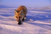 Animals / by Ashley Fox