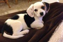 Puppies en honden / Cute en leuk