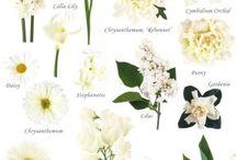 Flowers - White