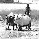 india-agriculture.