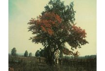 La polaroid de Tarkovski / La polaroid de Tarkovski