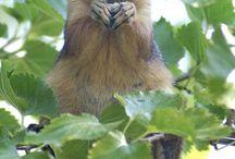 Hayvanlar alemi / Club Amazon Bördübet'te yaşayan sevimli dostlarımız.
