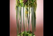 Интерьерные цветы
