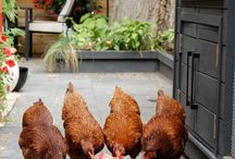 City Chickens & Pets