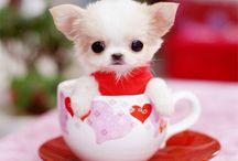 可愛い仔犬