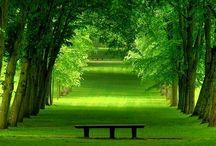 heaven / suka banget sama hijaunya..kayaknya peacefully.....mmmm