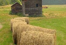 En el granero