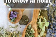Herbs (Spice+Medical)
