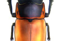 colors/insect/animals_inspiration