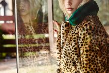 LEOPARD love / The shy and gracefull leopard fassinates me