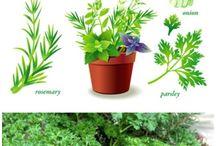 herbs,flowers