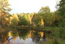 Herfst foto's & Höstbilderna / Herfstfotos Höstbilderna Hagens Camping & Vrigstad Älgpark