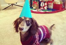 Party doxies! / Doxies ready to party!