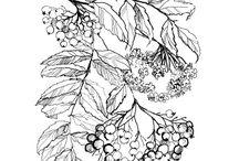 myberry