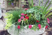 I can hardly Contain myself / Container Garden Inspirations / by Becky Wilson