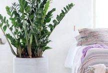 Pflanzen in Wohnräumen