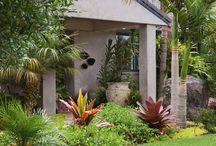 Subtropical themed garden