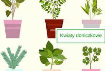 Kwiaty doniczkowe / Kwiaty doniczkowe w polskich domach. Zobacz, jakie najczęściej hodujemy i jak je aranżować.