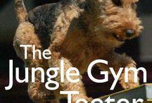 Dog Agility / Dog Agility Training