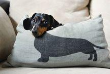 tacsi kutyuskák