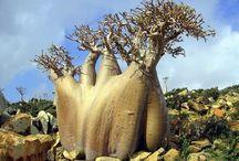 Astounding Trees