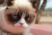 Favorite Grumpy Cats